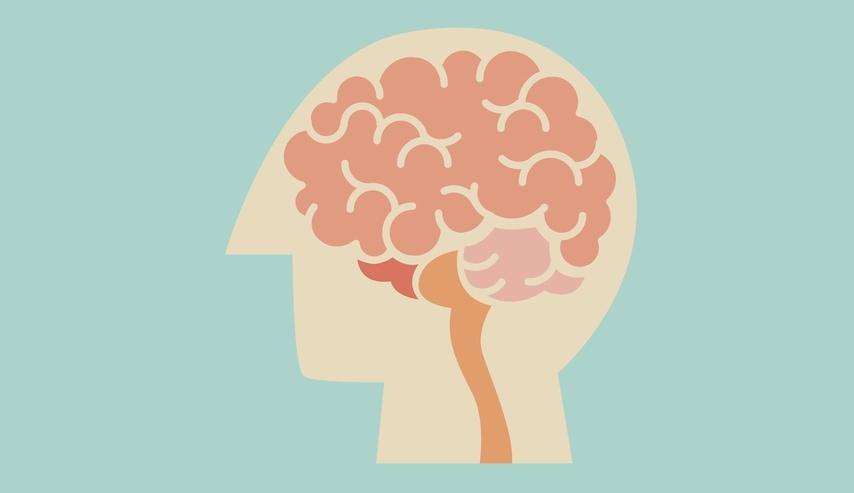 Los circuitos neuronales de la consciencia