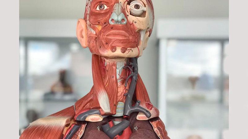 MOOC Fundamentos de anatomía y técnica quirúrgica básica